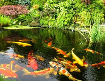 Pond design and build kent for Pond expert
